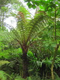 Giant fern Stock Images