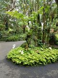 Giant Fern Providing Shade to Some Orchids. Big Island, Papikou, Hawaii Royalty Free Stock Photos