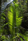 Giant ferns Stock Image
