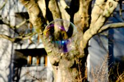 Giant flying soap bubble in city park royalty free stock photography