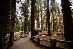 Giant Forest Sequoia National Park Stock Photography