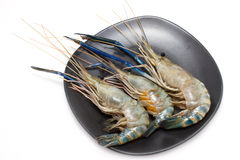 Giant freshwater prawn Royalty Free Stock Photos