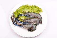 Giant freshwater prawn, Fresh shrimp isolate on white background Royalty Free Stock Photography