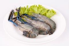 Giant freshwater prawn, Fresh shrimp isolate on white background Stock Photos
