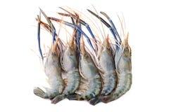 Giant freshwater prawn, Fresh shrimp isolate on white background Royalty Free Stock Photos