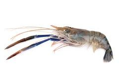 Giant freshwater prawn, Fresh shrimp isolate on white background.  Stock Photos