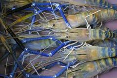 Giant freshwater prawn Royalty Free Stock Images