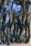 Giant freshwater prawn for sale at fresh food market in Samut Sakhon,Thailand. Stock Images
