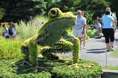Giant frog Stock Photos
