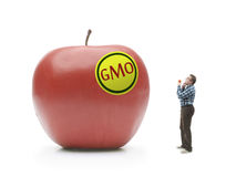 Giant GMO apple. Man holding natural organic apple being bewildered when looking at giant GMO-modified red apple shot on white stock image