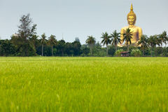 Giant golden buddha Stock Photos