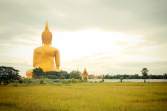 Giant golden buddha statue at Wat muang, Thailand Royalty Free Stock Photos