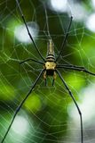 Giant golden orb web spider Nephila pilipes. Siting on the web. Beautiful green bokeh background. South Cambodia. Koh Rong Sanloem Stock Photography