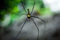 Giant golden orb web spider Nephila pilipes. Siting on the web. Beautiful green bokeh background. South Cambodia. Koh Rong Sanloem Stock Photo