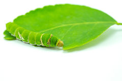 Giant green worm Royalty Free Stock Images