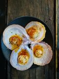 Giant grilled fresh Tasmanian scallops with fresh butter on black plate. Giant grilled fresh Tasmanian scallops with fresh butter on black dish on wooden table royalty free stock photography