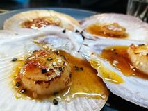 Giant grilled fresh Tasmanian scallops with fresh butter. Giant grilled fresh Tasmanian scallops with fresh Scottish butter stock image