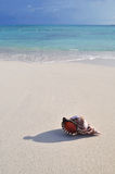 Giant horn shell on the Caribbean beach Stock Photo