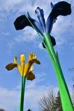 Giant Irises Stock Photos