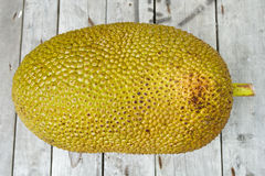 Giant Jackfruit Royalty Free Stock Photography