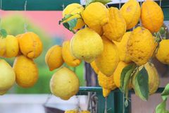 Giant lemons on a market stall Stock Images
