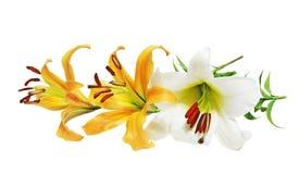 Giant Lily Stock Photo