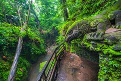 Giant Lizard in Sacred Monkey Forest, Ubud, Bali, Indonesia. Stock Photos