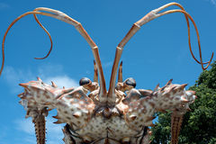 Giant Lobster Head Royalty Free Stock Photo
