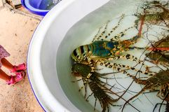 Giant lobster for sale in Phuket, Thailand stock photography