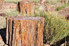 At Giant Logs. Colorful Petrified Wood At Giant Logs in Petrified forest National Park, USA Stock Photos
