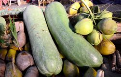 Giant Long Cucumber and Coconuts Royalty Free Stock Images