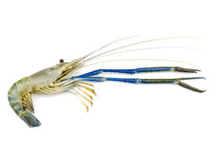 Giant malaysian prawn Stock Photos
