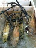Giant malaysian prawn. In market Stock Image