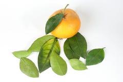 Giant Mandarin Orange Stock Images