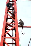 Giant Monkey on a Tower Stock Photos