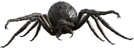 Giant Monster Spider, Insect, Isolated Stock Images