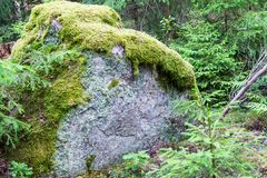 Giant Moss Covered Boulder in the Forest Stock Image