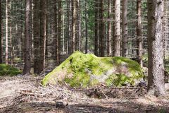 Giant Moss Covered Boulder in the Forest. A Single Giant Moss Covered Boulder in the Forest Royalty Free Stock Photo
