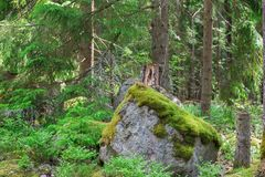 Giant Moss Covered Boulder in the Forest Stock Photos