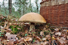 The giant mushroom and basket Royalty Free Stock Photography