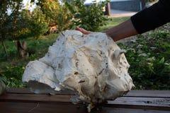 Giant mushroom fungus Stock Photos