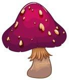 A giant mushroom plant Stock Photos