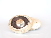 Giant mushrooms Stock Image