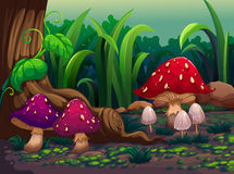 Giant mushrooms in the forest Stock Photography
