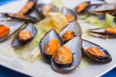 Giant mussels Royalty Free Stock Photo
