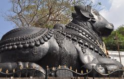 Giant Nandi Stock Photography
