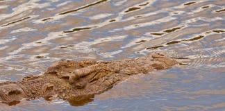 The giant Nile Crocodile Stock Photo