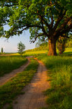 Giant oak beside country road Royalty Free Stock Photo