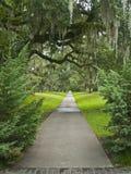 Giant Oak Pathway Stock Photography