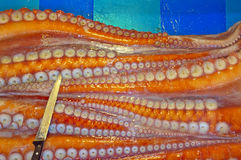 Giant octopus arm with suckers. Raw giant octopus arm with suckers on a market stall Royalty Free Stock Image
